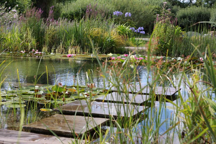 Stepping stones appear to float alongsidea collectionof water lilies in a natural pool designed by Ensata in the UK. Photograph courtesy of Ensata.