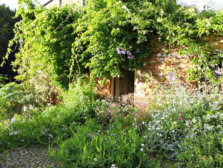 Entrances are magical. Lathyrus latifolious, a perennial pea, creates a rich carpet at one gateway into the walled garden.