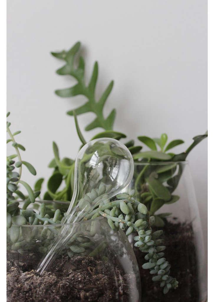 glass-watering-globe-bomisch-gardenista