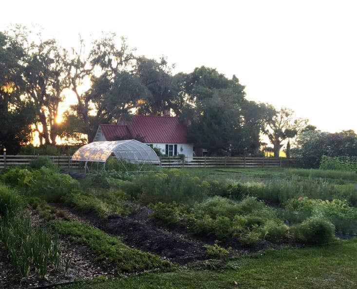 greyfield-inn-cumberland-island-kitchen-garden-hoop-tunnel-gardenista
