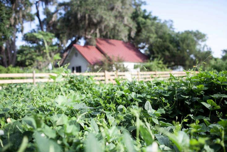 greyfield-inn-kitchen-garden-fence-red-foor-gardenista