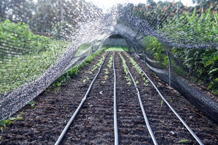greyfield-inn-kitchen-garden-netting-irrigation-gardenista