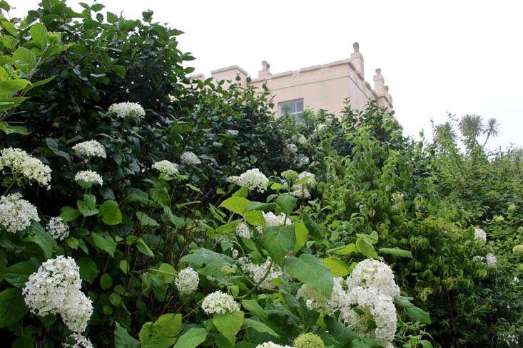 hydrangea-annabelle-kendra-wilson-trematon-gardnista (1)