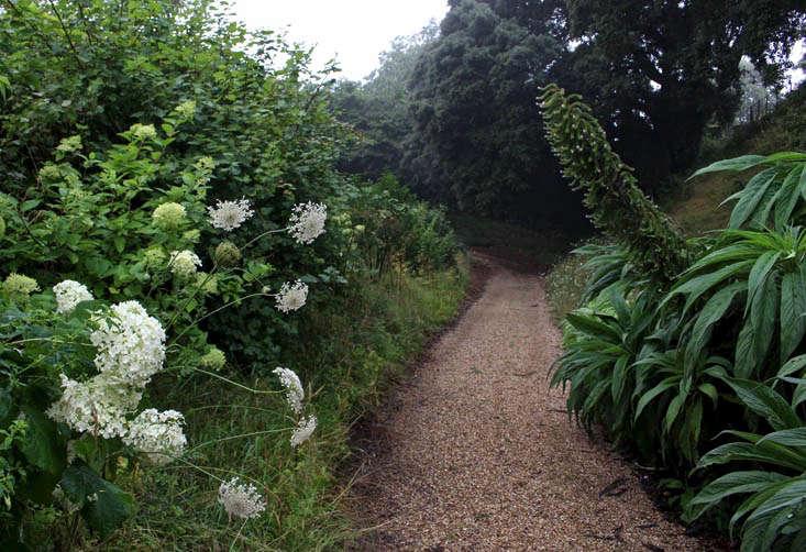 hydrangea-echium-trematon-gardenista
