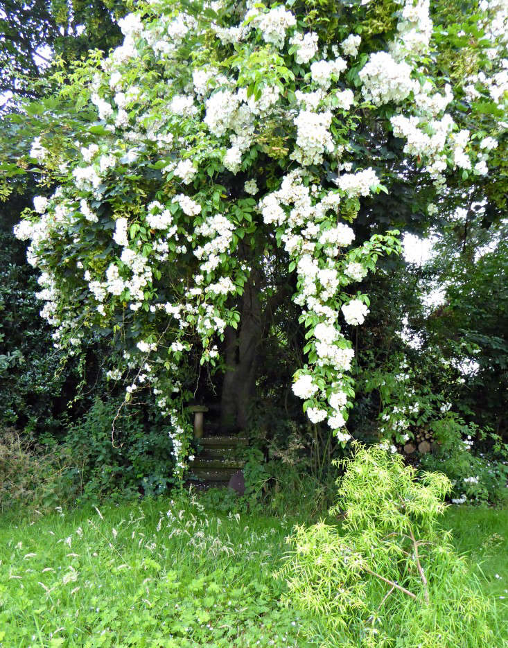 How to beautify an unloved tree?