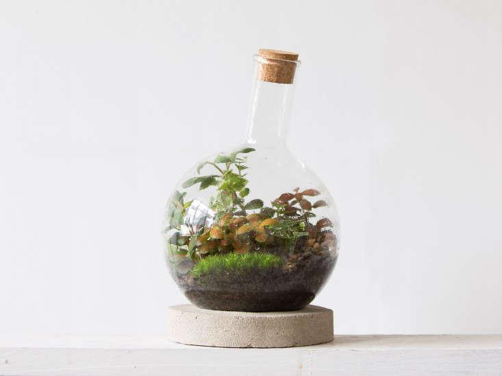 london-terrariums-Boiling-Flask-gardenista