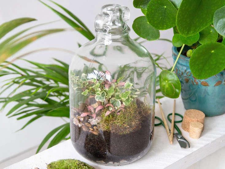 london-terrariums-glass-jar-jugardenistaPrivate-Orders_4