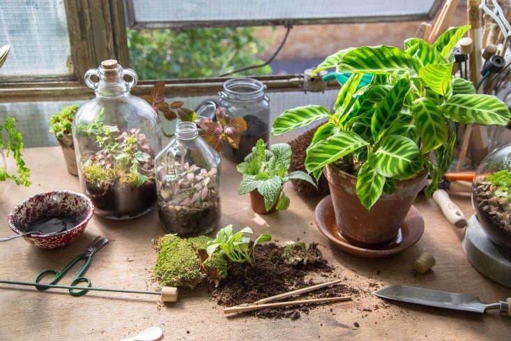 london_terrariums_materials_dupplies_diy_gardenista169