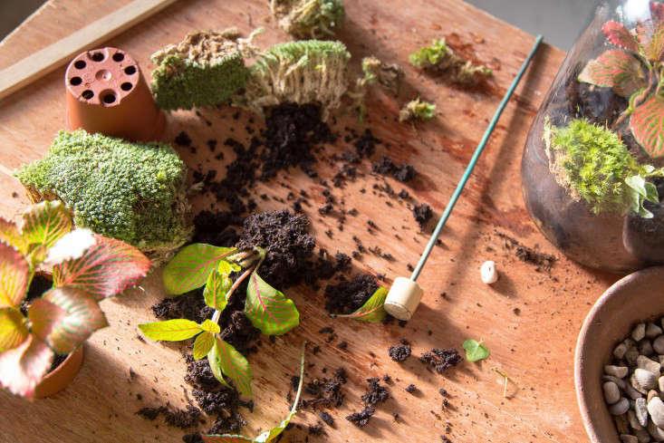 london_terrariums_plants_materials_gardenista_355