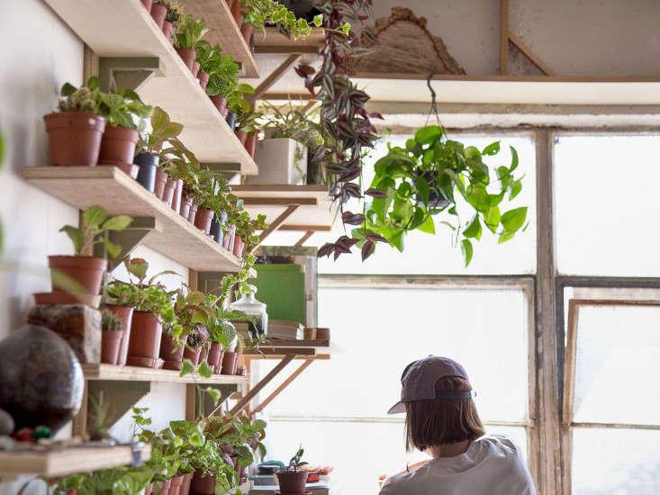 london_terrariums_plants_shelves_gardenista_Contact