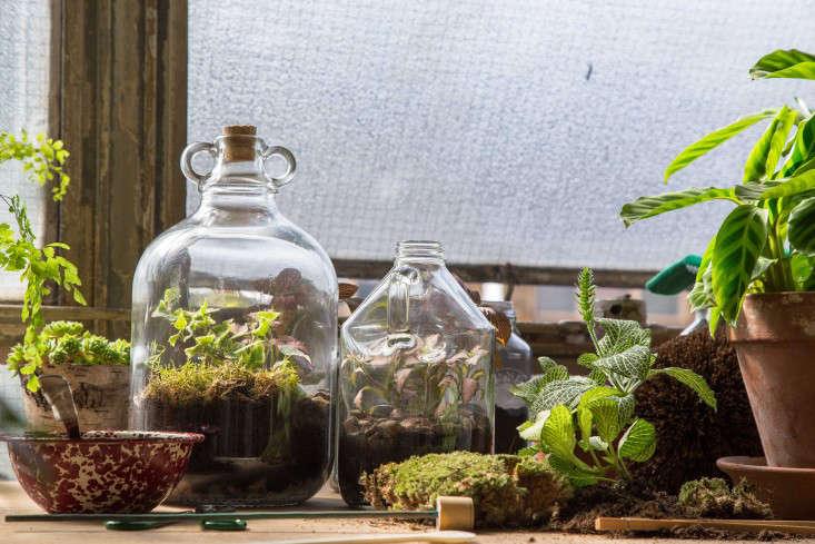 london_terrariums_window_shelf_gardenista_166