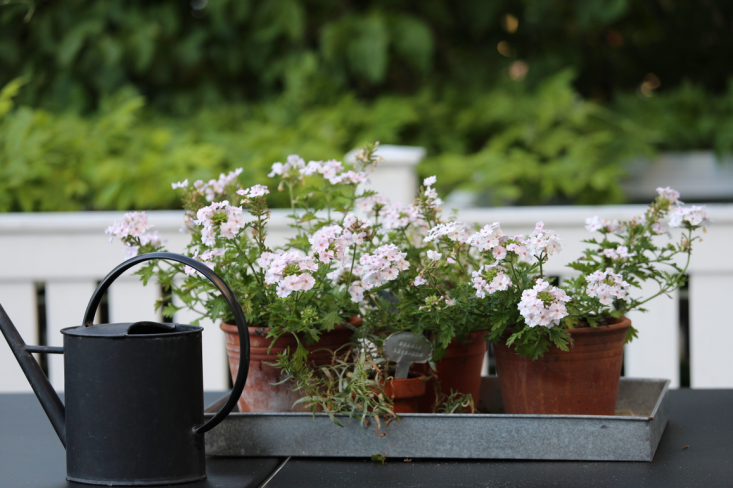 mette-krull-black-watering-can-gardenista