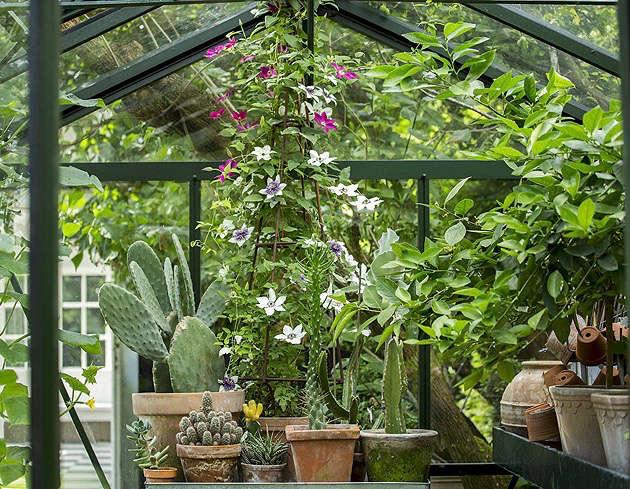 mette-krull-greenhouse-pots-terra-cotta-cactus-cacti-gardenista