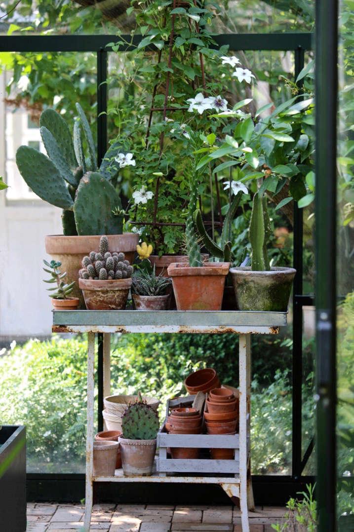 mette-krull-greenhouse-potting-table-terra-cotta-pots-cactus-cacti-4-gardenista (1)