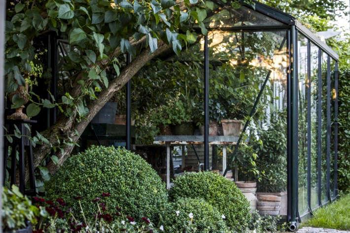 mette-krull-greenhouse-topiary-boxwood-9-gardenista