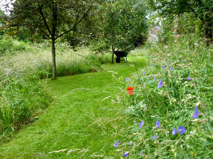 In Sally French-Greenslade&#8\2\17;smeadow in Cheshire, England, &#8\2\20;everything is allowed to run rampant, from wildflowers such as evening primrose and wild geraniums to nettles, which make a wonderful wildlife habitat,&#8\2\2\1; writes Clare Coulson. &#8\2\20;The meadow is defined with wide mown paths and occasional trees. &#8\2\2\1; Photograph by Coulson, from Garden Visit: A Wildflower Meadow at the Edge of an English Cottage Garden.
