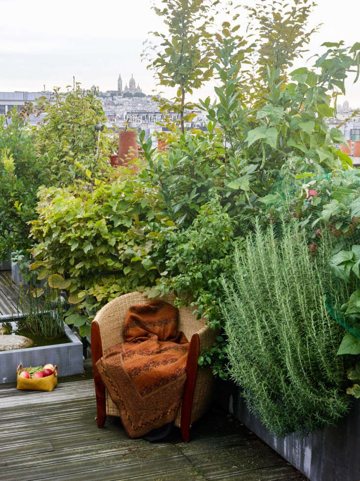 paris-roof-garden-marion-brenner-gardenista-dominique1309-030