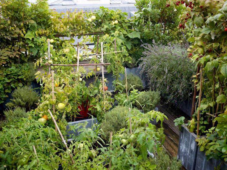 paris-roof-garden-marion-brenner-gardenista-dominique1309-180