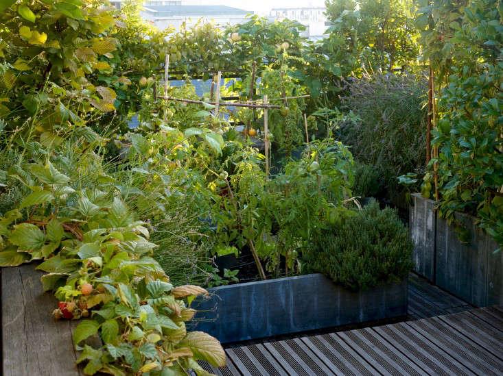 paris-roof-garden-marion-brenner-gardenista-dominique1309-323