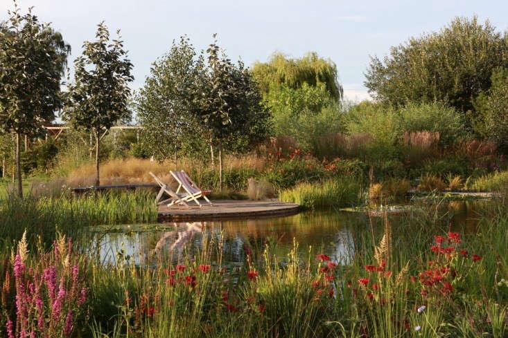 perennial-meadow-natural-pool-ellicar-ensata-uk-gardenista