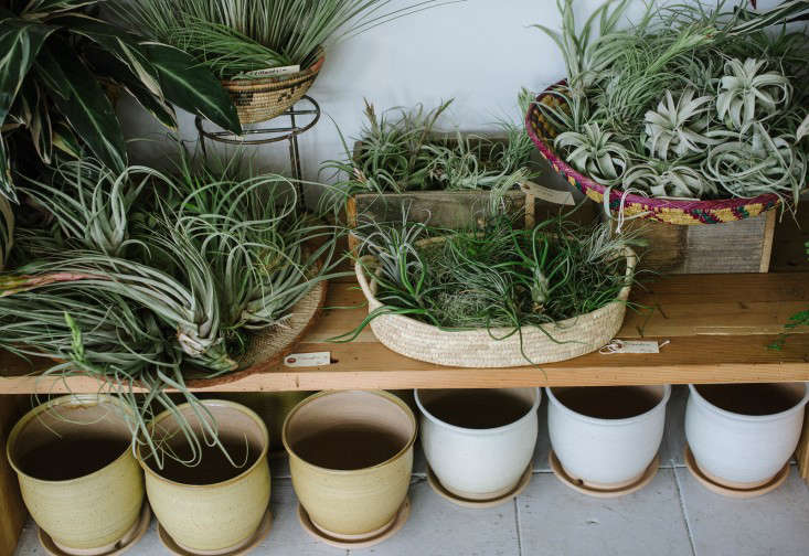 solabee_airplants_gardenista