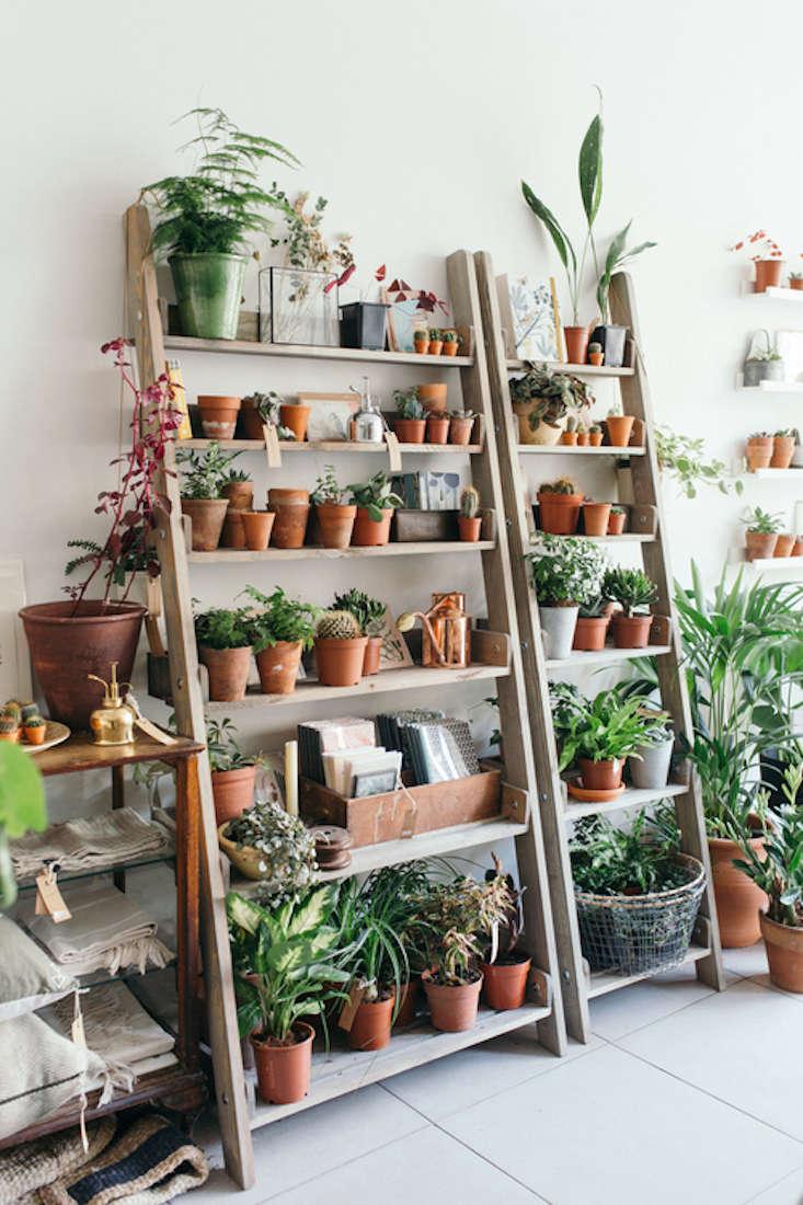 spruce-ladder-plant-shelves-shelf-botany-gardenista