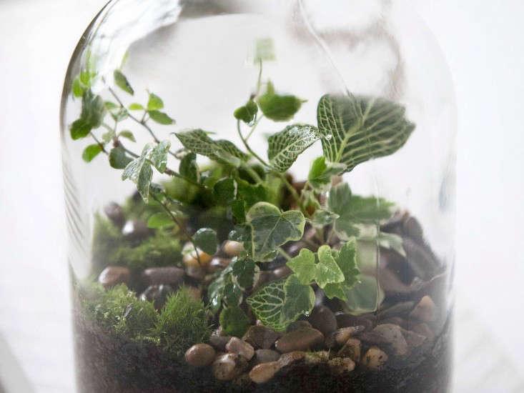 terrarium-Demijohn-plants-gardenista