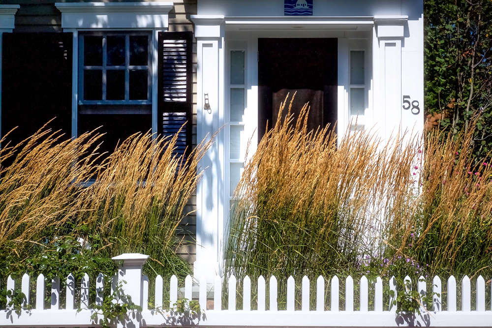 In the tiny front yards of P-town,Cape Cod&#8\2\17;s traditional privet hedges can feel like awall, blocking light and breeze and making one feel hemmed in. In the West End residence of Ian Bruce and Craig Smith, Tim created a softer, more welcoming and dynamicscreen with grasses—Calamagrostis &#8\2\16;Karl Foerster&#8\2\17; —which sway in the ocean breezes.
