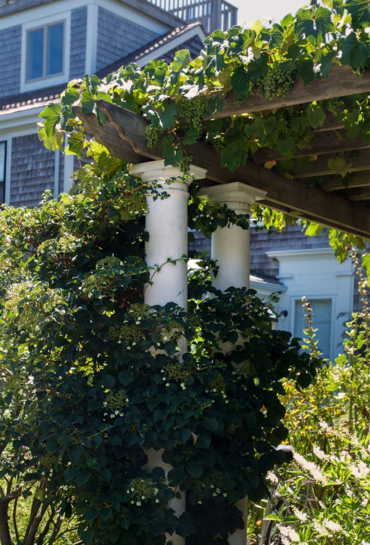 See more of this garden in  Garden Ideas to Steal from Provincetown on Cape Cod. Photograph by Justine Hand.