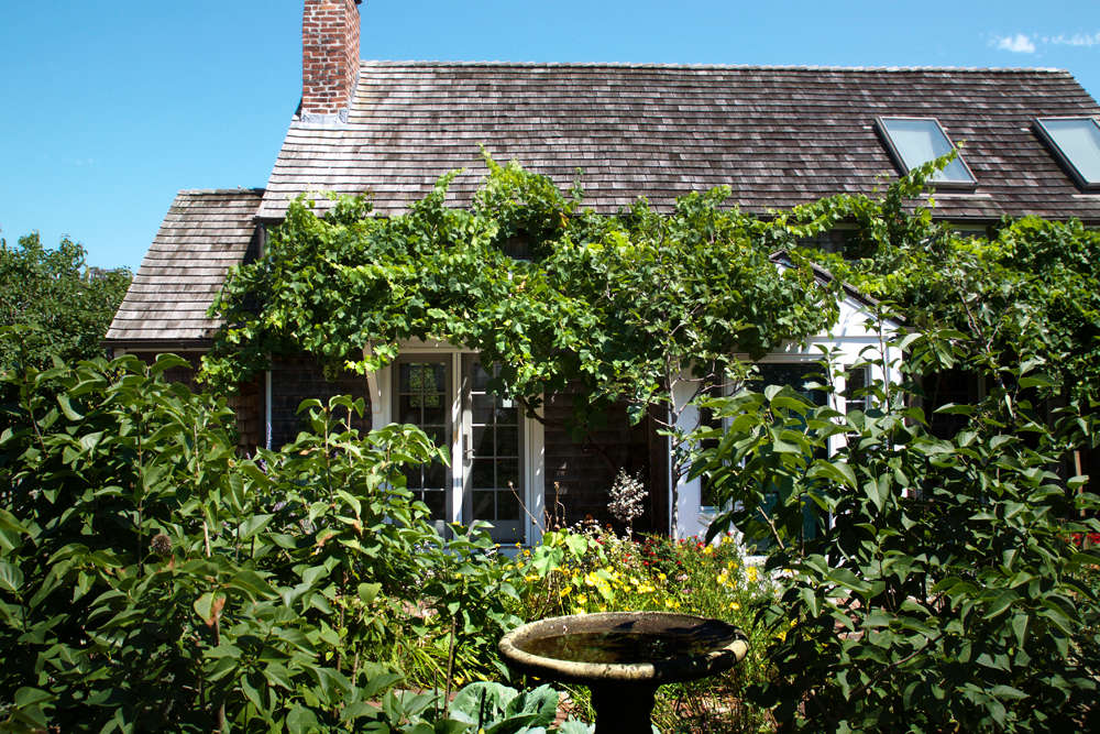 Grapes grow wild in the Cape&#8\2\17;s scrubby woodlands, so using their cultivar cousins to create shade is not as adventitious as you might think. Here grapevines are employed in a wilder manner to shade this sunny facade, belonging to Marty Davis and Alix Ritchie.