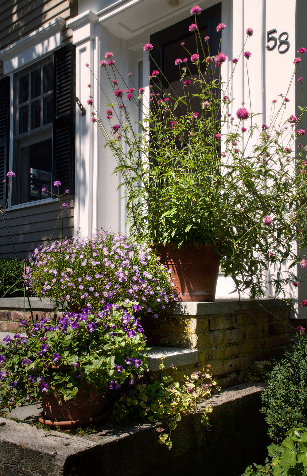 Crowning the front steps of Ian Bruce and Craig Smith&#8\2\17;s house, exuberant Gomphrena provides a bit of Seussian whimsy. Below, Swan River Daisy and Torenia ground the arrangement as they cascade down the steps.