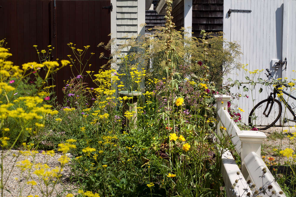 Few would dare to work with the acid yellow of Patrinia, but against this chocolate door it really works. In this clamshell driveway, where this perennial self-seeds to wild effect, Tim paired Patrinia with fennel and oregano.