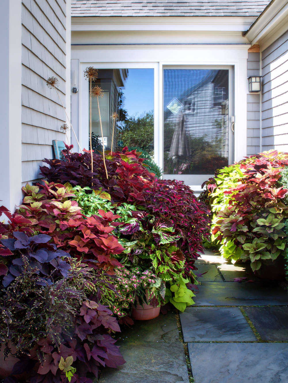 In this cool, shady courtyard of a West End home, Tim added some dramatic fire with layers of large coleus plants coupled with sweet potato vine.