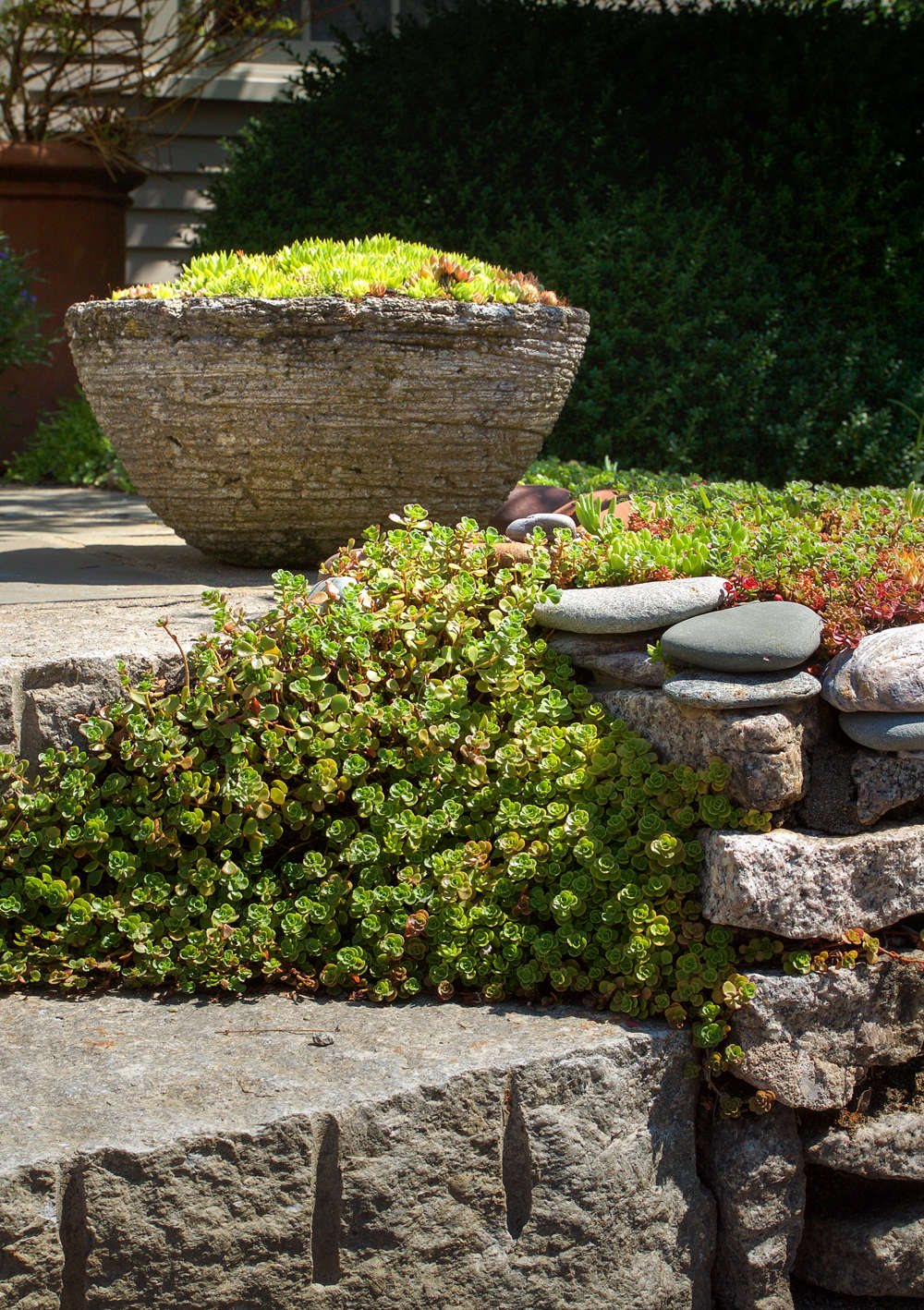Stonecrop and Sempervivum enhance the rock-garden effect of the stone stairs of this West End home.