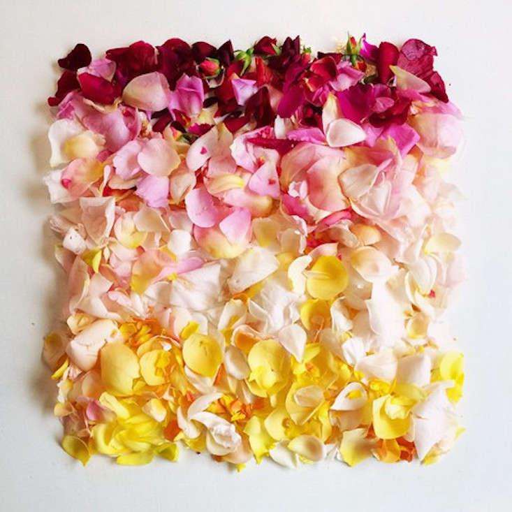 Flora_Foragar_hombre_roses_Gardenista_current_obsessions