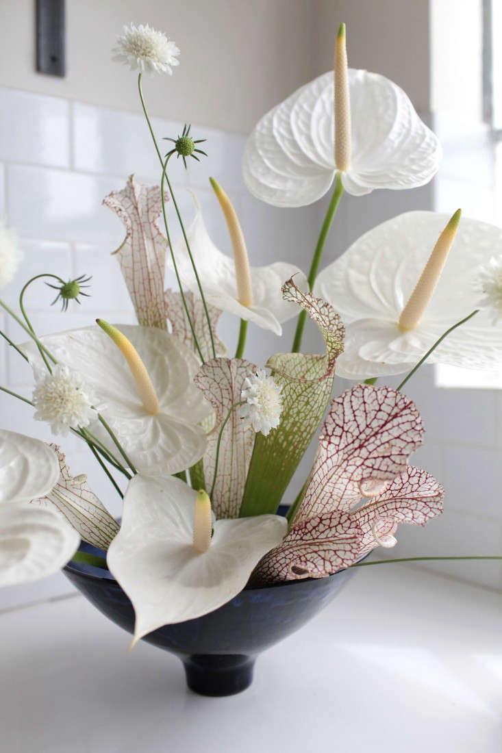 Gardenista-anthuriums-sophia-moreno-bunge-3