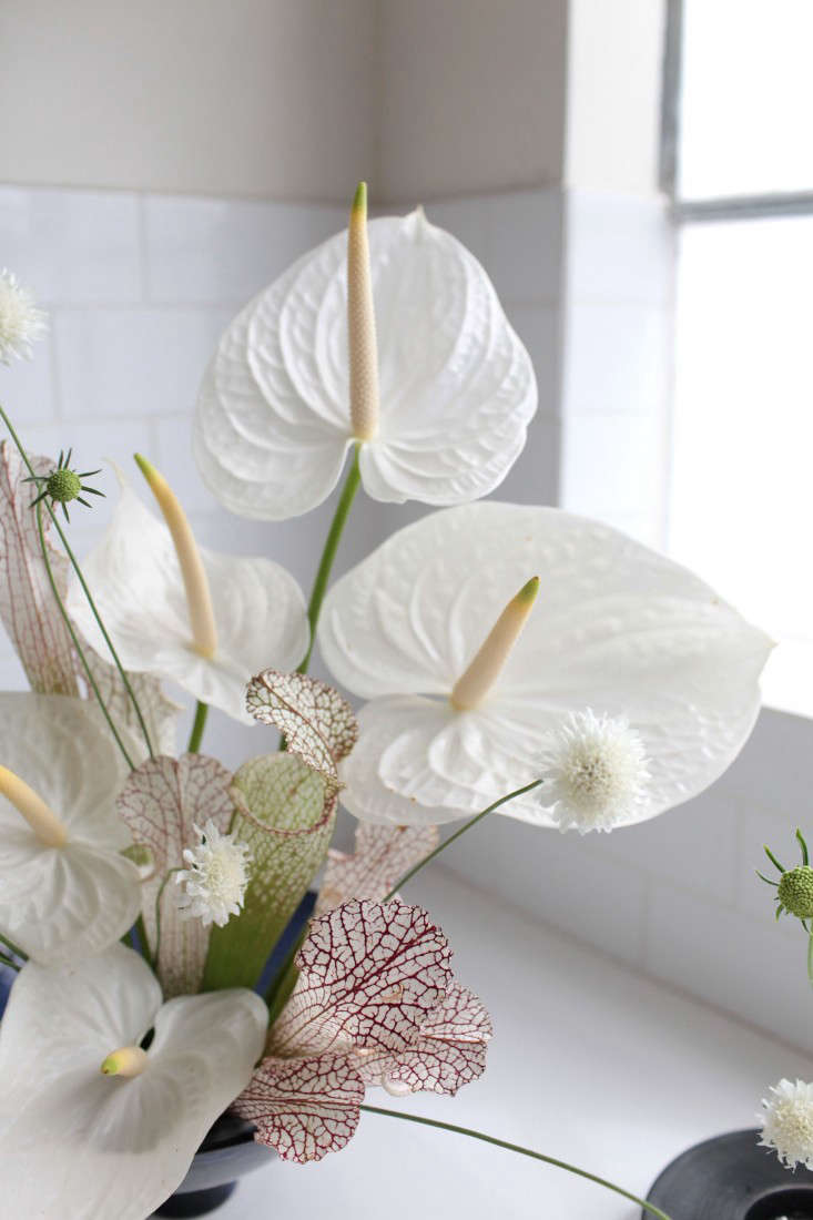 Native to warm climates in the Americas (they can be found growing from Mexico to South America), anthuriums are members of the arum family and in interceding decades since the heyday of Mrs. Morgan&#8\2\17;s hothouse flower they&#8\2\17;ve become popular houseplants because of their hardiness.