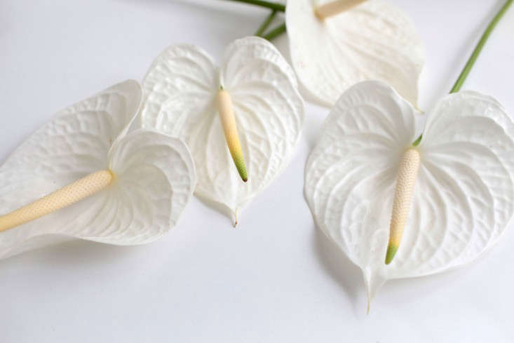 Beauty is in the eye of the beholder. Perhaps Mary J. Morgan loved the strong, architectural lines of anthuriums, with their fleshy spadices protruding from the middle of the leaves. (Tiny flowers grow on the spikes.)