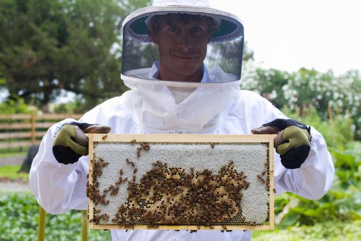 Greyfield-Beekeeper-Ryan-Graycheck-Lyric-Lewin-gardenista