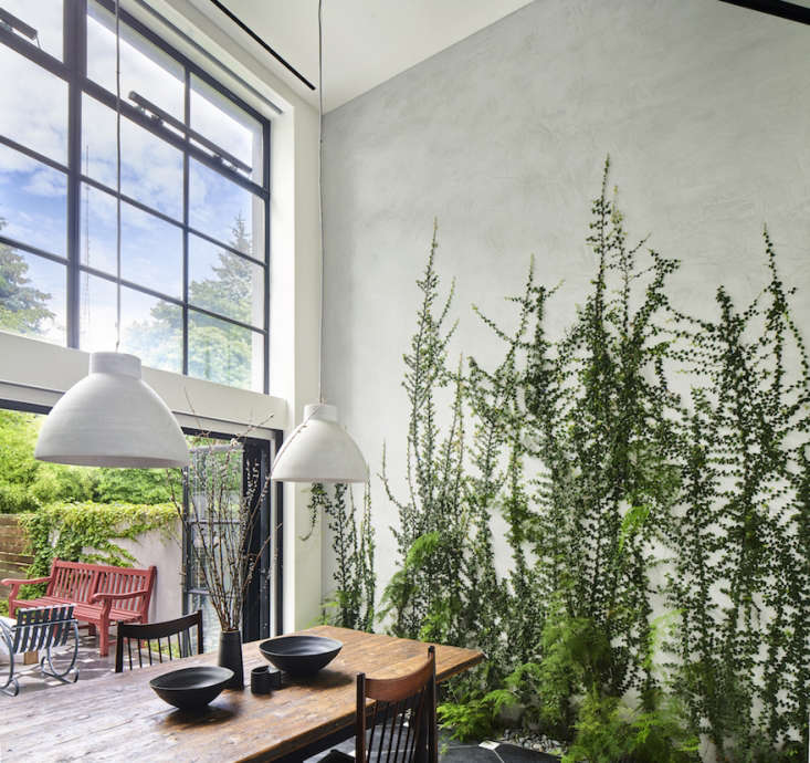 In a Brooklyn, NY dining, architect Kim Hoyt specified full-depth masonry planters below grade as part of a remodel, complete with integrated irrigation and drainage. They planted creeping fig as the main vine, with asparagus fern and rex begonia vine as accents. Photograph by Dan Wonderlycourtesy of Kim Hoyt Architect.
