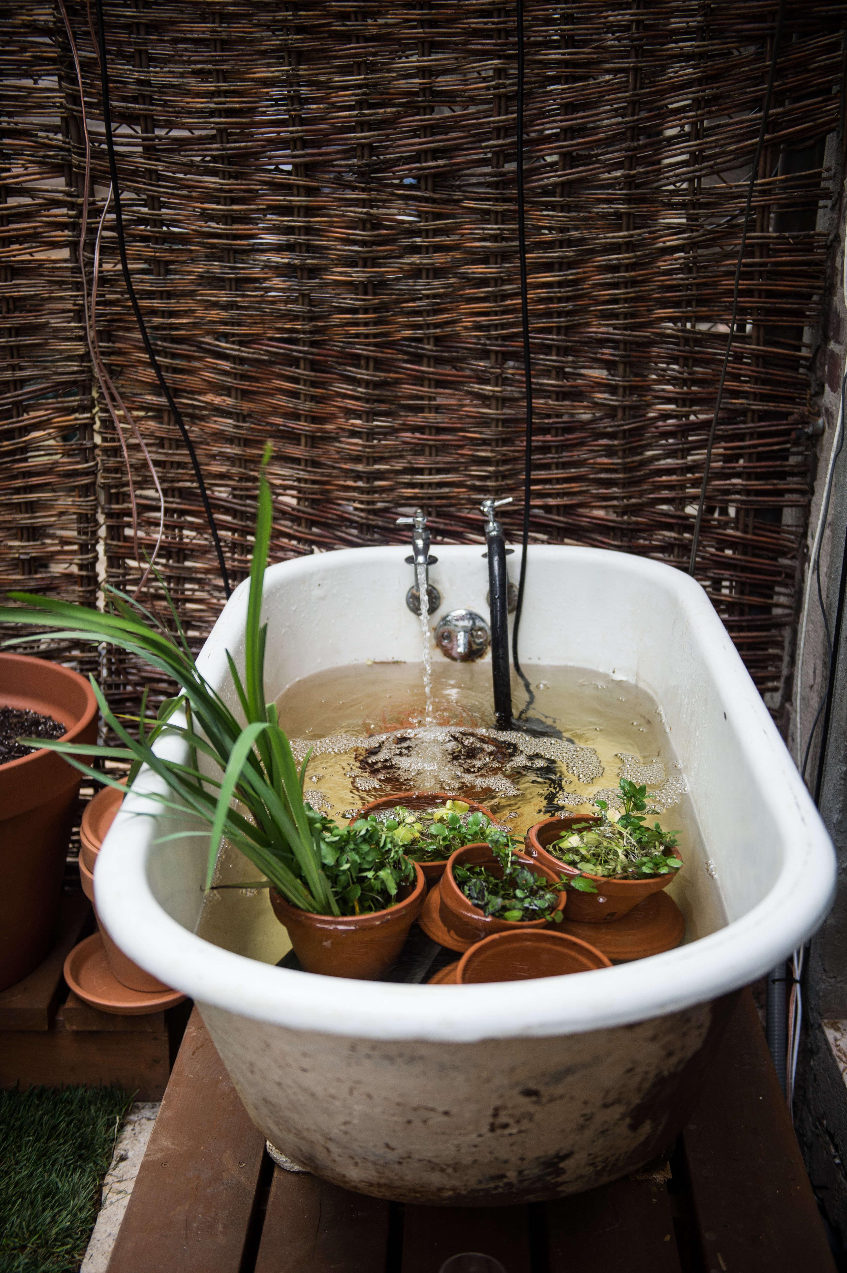 Olmsted Aquaponics Bathtub by Evan Sung