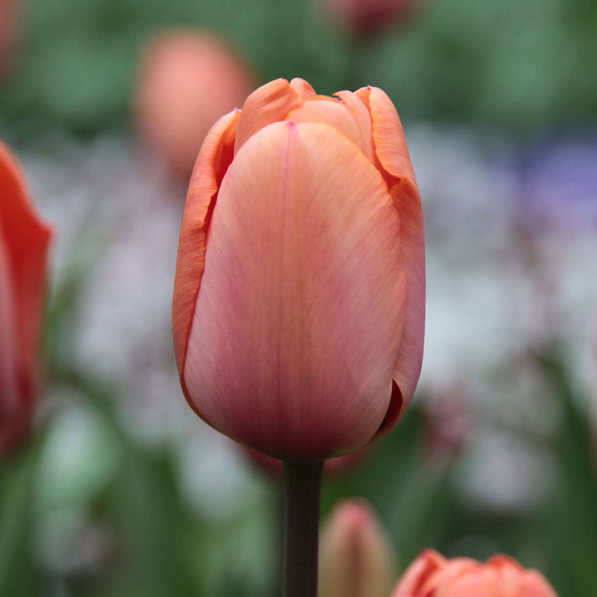 Spring Bulbs from Terrain | Gardenista
