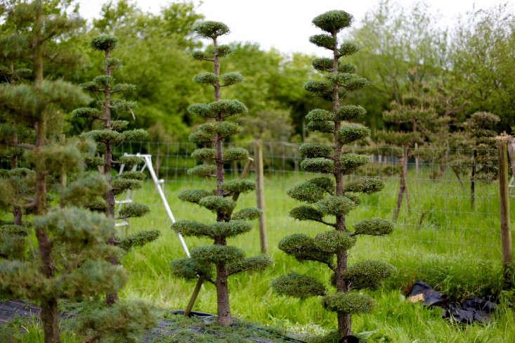 cloud-prune-tree-gardenista