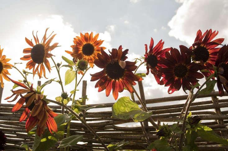 darsham_nurseries_kevin_foord_Gardenista_KF11467