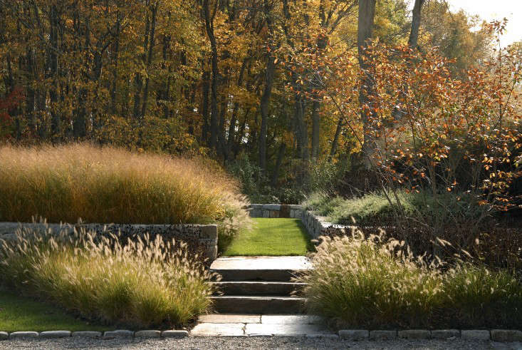 Fountain grasses. Photograph by Charles Mayer for Stephen Stimson Associates Landscape Architects.