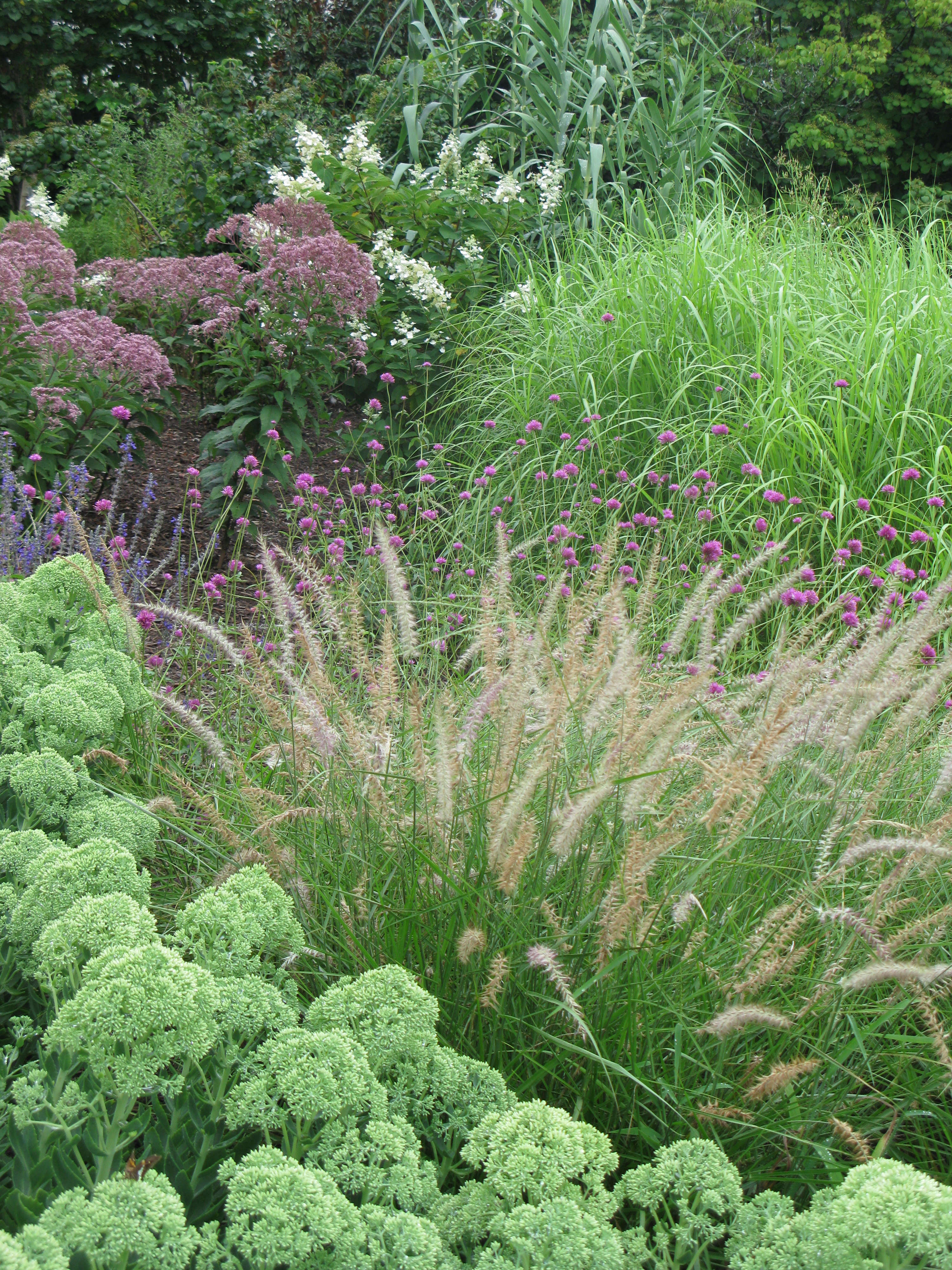 field-guide-pennisetum-karleyrose-grouping-gardenista