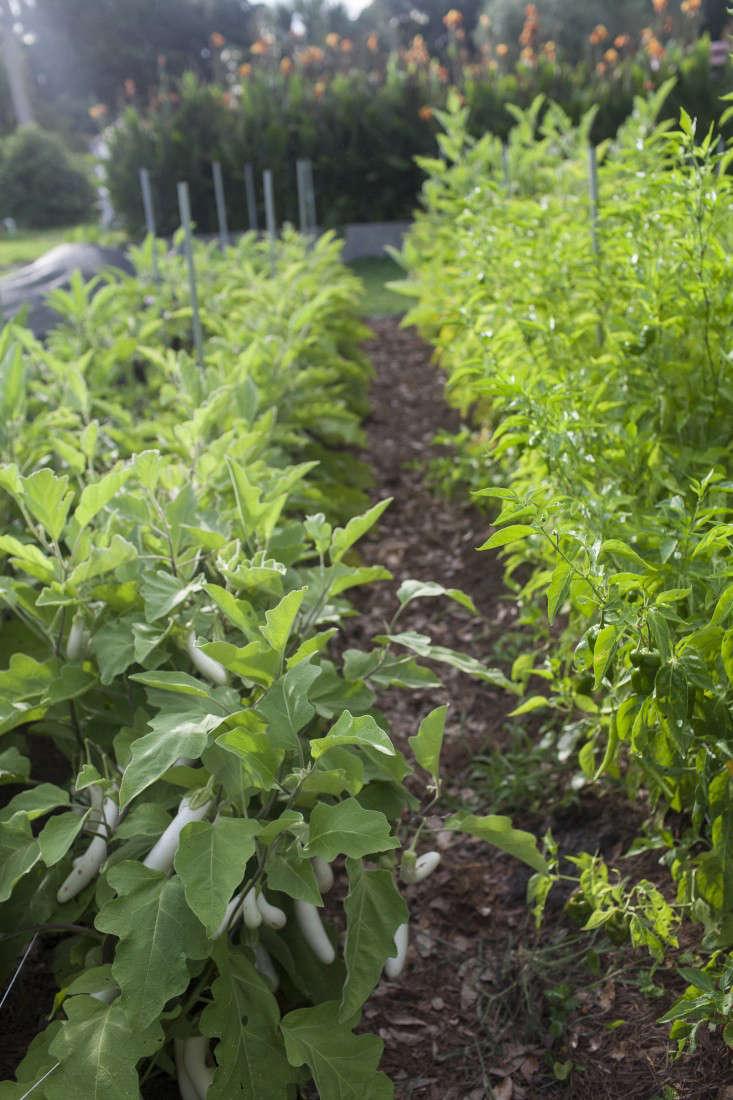 greyfield-inn-edible-garden-rows-gardenista