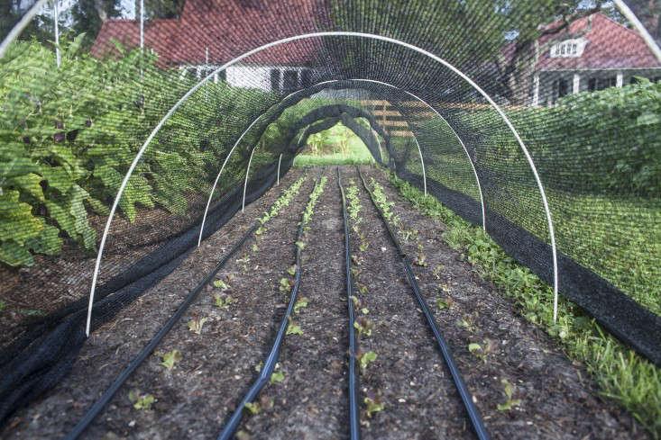 greyfield-inn-lettuce-tunnels-hoops-gardenista