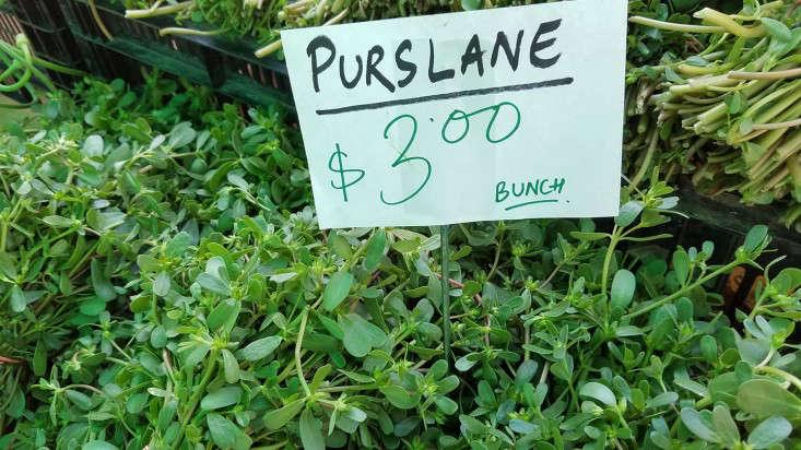 market_purslane_marieviljoen_gardenista