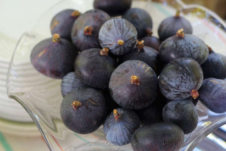 purple_figs_marieviljoen_gardenista